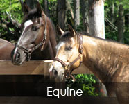 Equine Feed Products